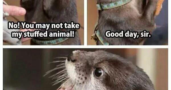Good Morning Otter Meme : Not so playful otter creature feature pinterest