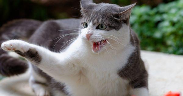 5 Ways To Stop Cat Aggression And Bad Behavior Cat Biting Cat Behavior Bad Cats