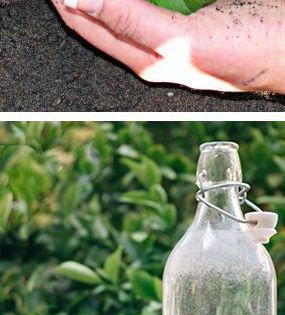 DIY Miracle Grow: 1 gallon of water, 1 tbsp epsom salt, 1