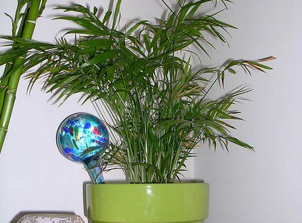 10 best houseplants to de stress your home and purify the for Nasa indoor plant list
