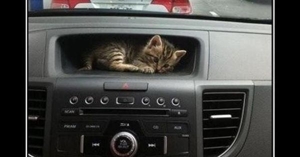cats find the best hiding places