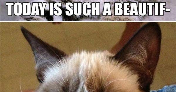 dr elseys cat litter petco