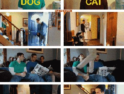 These Guys Acted Out Situations As A Dog vs. As A Cat