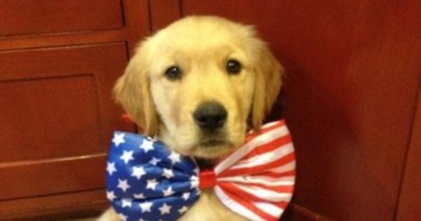 Patriotic pupper!!!