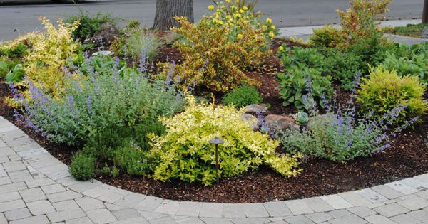 Low maintenance front yard landscaping front yard garden for Low maintenance front garden