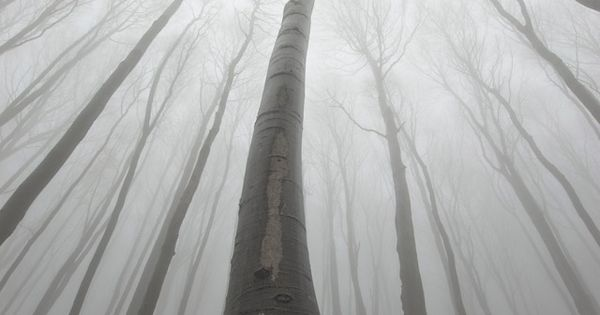 The Surreal Forests of Romania- wouldn't actually go here though it looks