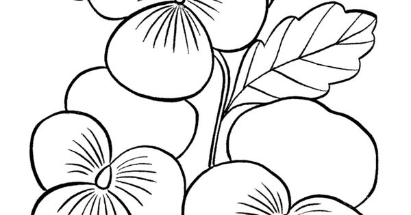 Printable Coloring Pictures Of