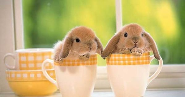 Baby Bunnies In Tea Cups for the children from the Easter Bunny!