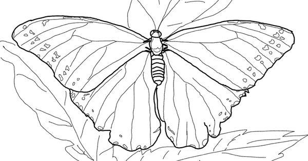 Blue Morpho Butterfly Super Coloring Rainforest