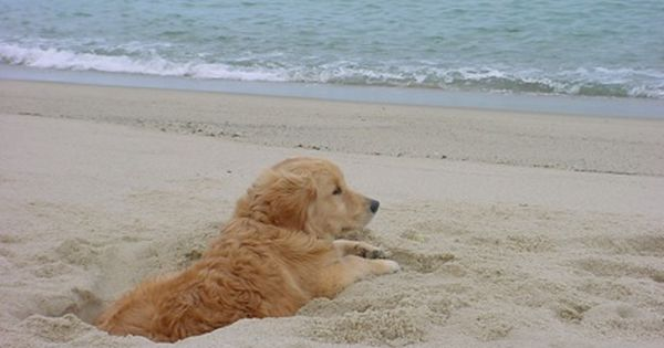 What You Re About To Witness Is A Nightmare Dog Beach Cute