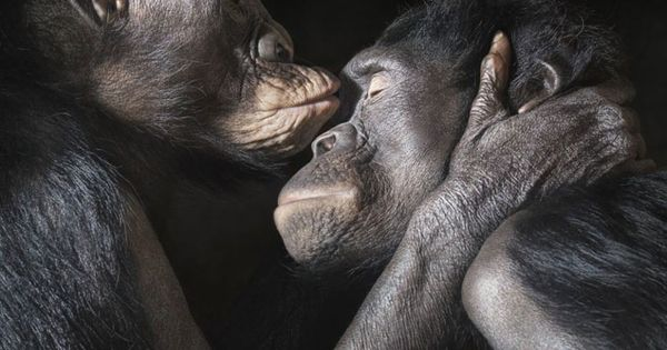Almost Human: animal photography by Tim Flach