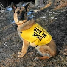 Selection Of Give Me Space Vests For Reactive Dogs To Discourage