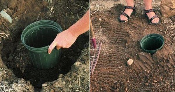 truc pour faire pousser des courgette enterrer un pot en terre cuite et semer les graines. Black Bedroom Furniture Sets. Home Design Ideas