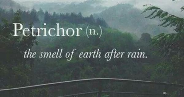 Petrichor n the smell of earth after rain verbose for Musty odor definition