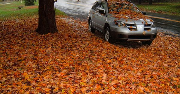 Fall Leaf Cleanup Leaf Clean Up Yard Maintenance Front Yard Landscaping Simple