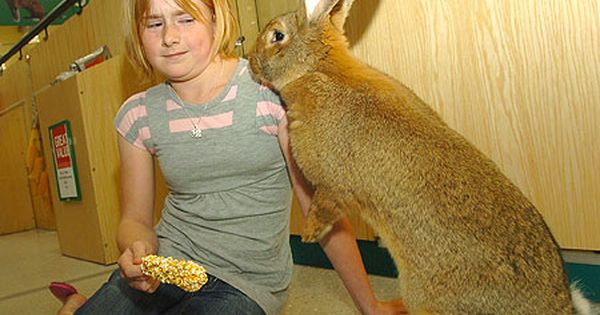 European Giant Rabbit Giant Rabbit Animals For Kids Rabbit Breeds