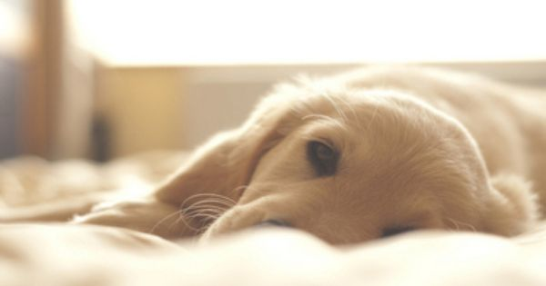 Aw, I want to wake up to a puppy face!