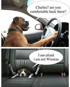 Dog driving a car - Coub - The Biggest Video Meme Platform