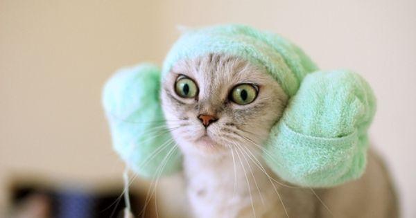 #Funny Cat StarWars Geek PrincessLeia ObiWan