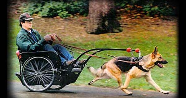 A Dog Pulling A Cart Dog Exercise Dogs Dog Agility
