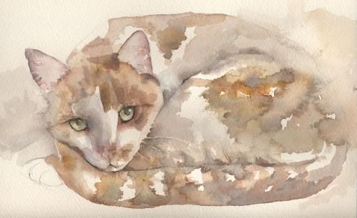 Loose Watercolor Cat Lesson Watercolor Cat Cat Art Cat Portraits