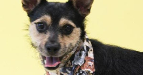 Dallas Humane Society Dog Of The Week My Name Is Alton Just Like The Master Chef Alton Brown Don T Worry I Am Not A Humane Society Beautiful Dogs Dogs