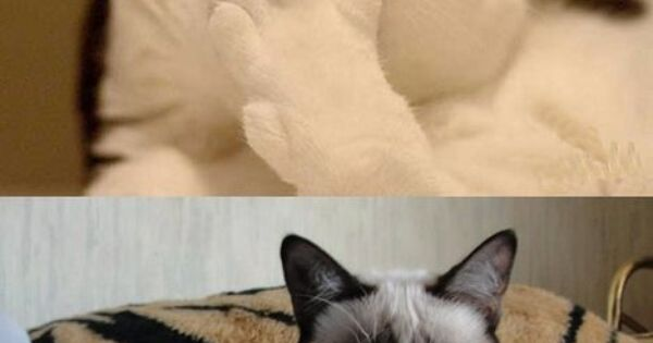 grumpy cat meme | ... you want to know something funny –