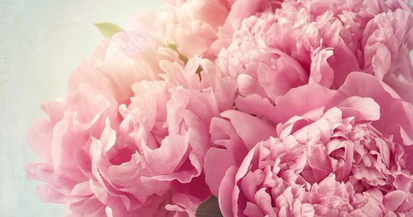 Roses In Garden: Peonies ★ Find More Cute Vintage Wallpapers For Your
