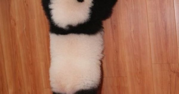 pandacute baby Animals Baby Animals| http://cute-baby-animals-521.blogspot.com