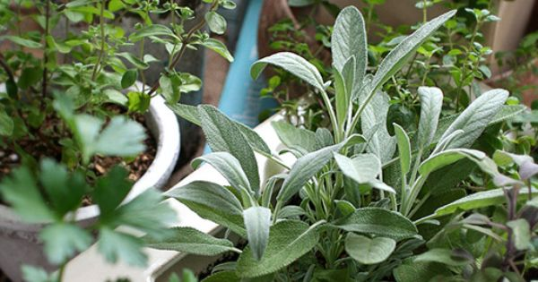 Am nager un jardin d 39 herbes aromatiques pr s de la maison - Faire un jardin d herbes aromatiques ...