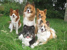 Petra Ritter Anrochte Berge Elo Zucht Hunde Welpen Familienhunde Kinderhunde Hunde Welpen Hunde Familienhund