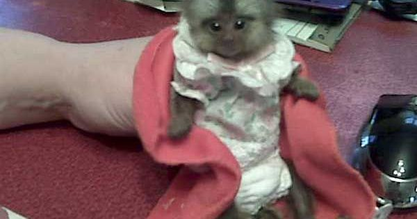 Seriously folks there is a Pet Monkey up for adoption on ...