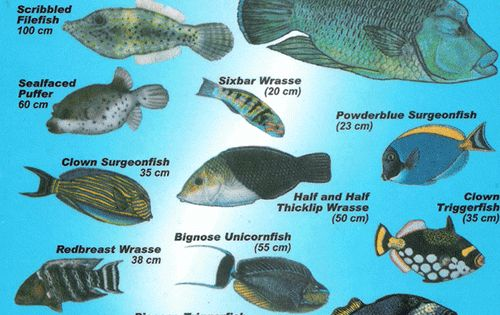 South east asian marine fish chart vegetables pinterest fish chart names and underwater for Saltwater fish names