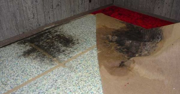 How to get rid of black mold the easy and cheap way how to get rid how to get and natural for How to get rid of black mold in bathroom