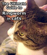 Ringworm In Cats The Ultimate Guide Ringworm In Cats Cats