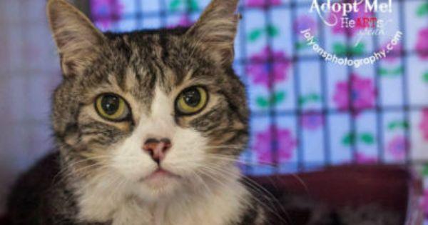 Gumtree Pls See Renbury Com Au Save A Dog Cat Kitten Australia Nsw