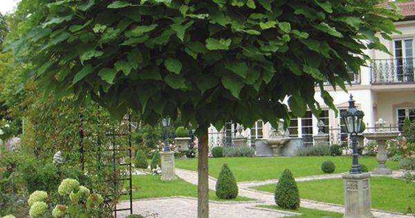 kugel trompetenbaum der sch nste baum f r den vorgarten. Black Bedroom Furniture Sets. Home Design Ideas