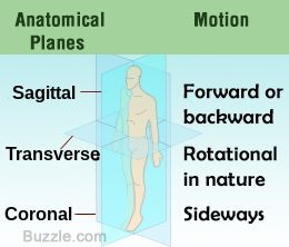 35++ The three major anatomical planes are inspirations