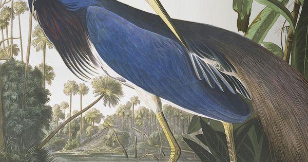 Blue Heron Bird Wall Mural John James Audubon Wallpaper