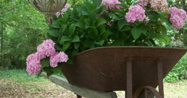 Pink Hydrangea in wheel barrow. I'll have blue, please.