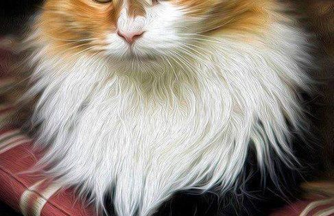 Pin By Irina Abraham On Art Kittens Cutest Super Cute Kittens