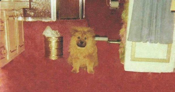 Getlow In Linda S Upstairs Bathroom At Graceland This Dog
