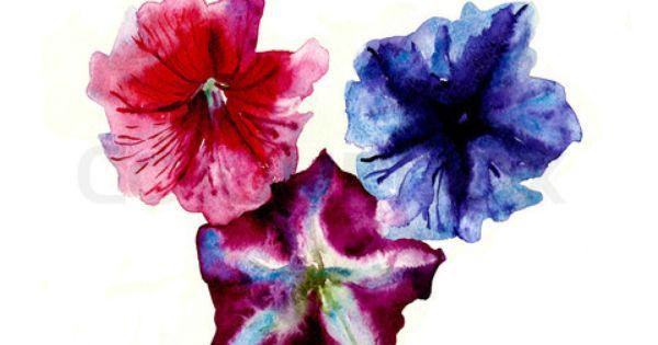 Watercolor Three Multi Color Petunias Flower Head Stock Photo Dibujos Tatuajes Disenos Para Tatuajes