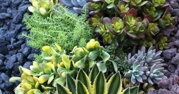 Am Nagement Jardin Ext Rieur M Diterran En Quelles Plantes Choisir Am Nagement De Jardin