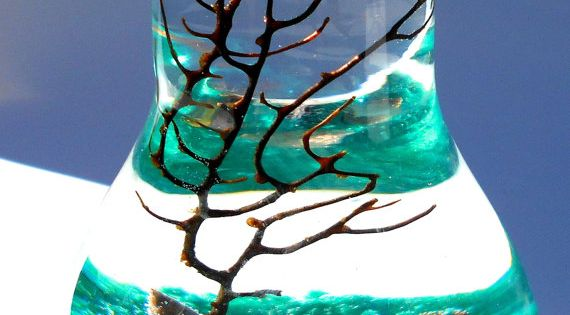 Marimo terrarium, lightbulb terrarium, Aqua terrarium, zen garden, living home decor, wedding