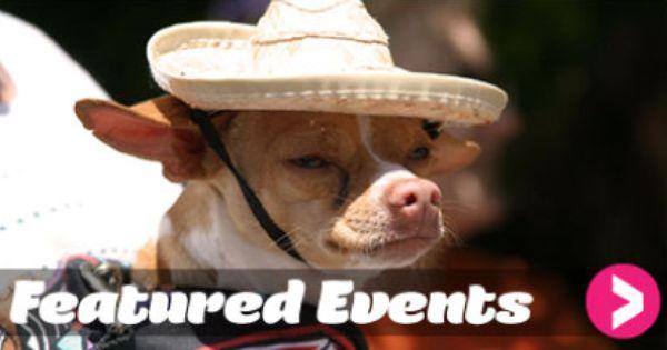 Cinco De Mayo Denver Celebrate Culture Cinco De Mayo Chihuahua Moving To Denver