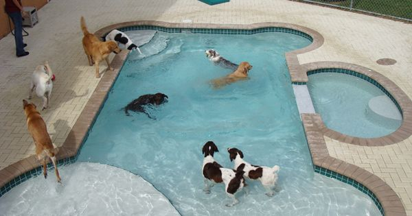 Dog Kennels for Sale | Dog Bone Dog Pool