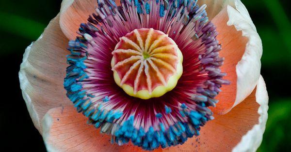 Exotic Flower gardening flowers flowerporn cultivation