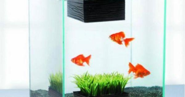 Home Small Aquarium Ideas Creative Aquarium Pinterest