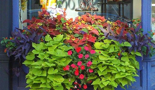 beautiful window box portsmouth nh downtown storefront things to do at home pinterest. Black Bedroom Furniture Sets. Home Design Ideas